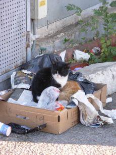 שני חתולים מצאו